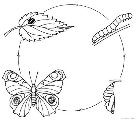 imagen para colrear del ciclo de vida conejo los girasoles semana del libro en la escuela