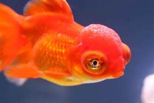 Fish S Fish Can Recognize Your Really Nbc News