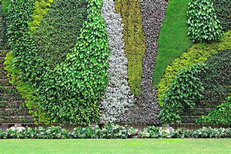 Walled Garden Nursery Vertical Garden History The Best Plants For Walls