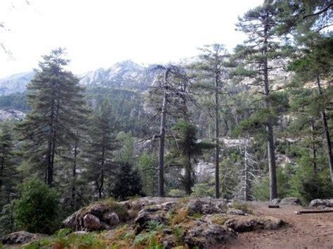 corsica turisti per caso foresta d aitone viaggi vacanze e turismo turisti per caso