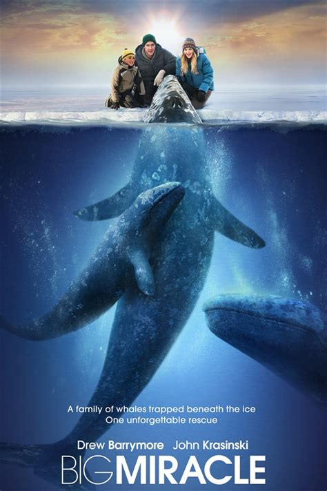 Big Miracle Free Megavideo Big Miracle Poster Iphone Wallpaper 640x960 Iphone 4 4s Wallpaper Free