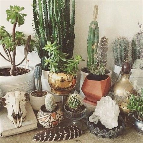 Indoor Cactus Garden Ideas 1000 Ideas About Indoor Cactus Garden On Cacti Garden Indoor Gardening And Cactus