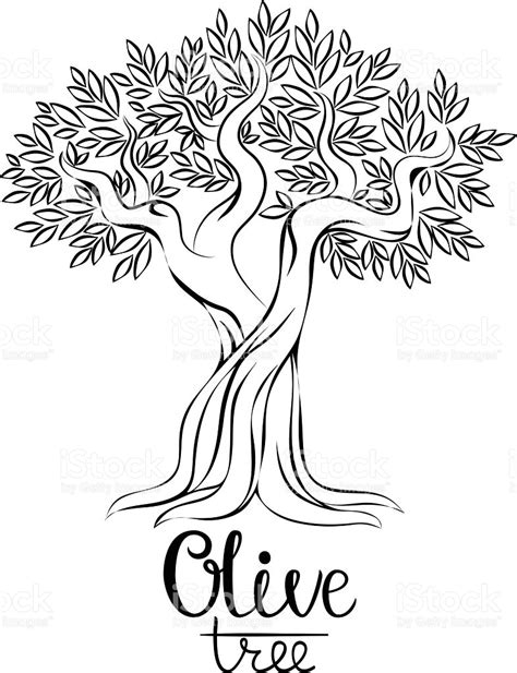 coloring page of olive tree olive tree vector illustration royalty free stock art