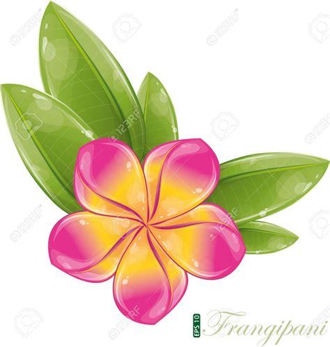 Bunga Plumeria Frangipani Pink Marine frangipani clipart clipground