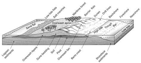 sand dune cross section beach basics coastal care