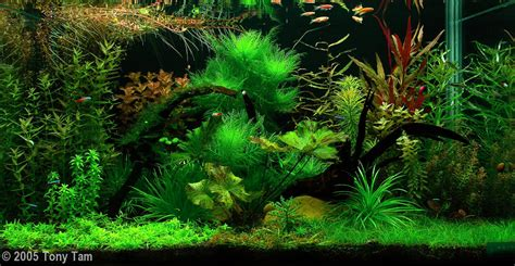 aquascape wallpaper aquascape wallpaper 28 images aquascape wallpapers