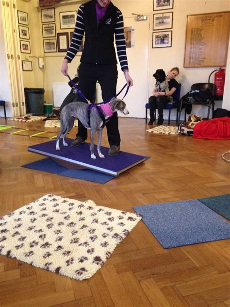 ttouch for dogs canine ttouch cpd course therapy
