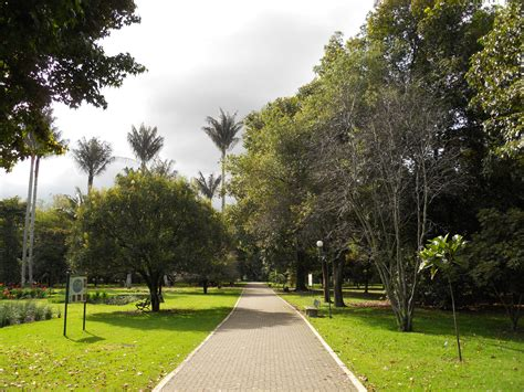 entrada jardin botanico bogota file palmas de cera en el jard 237 n bot 225 nico de bogot 225 jpg