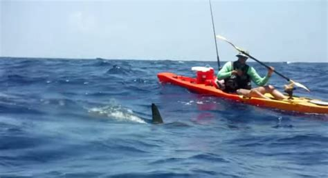 fishing boat vs kayak 4 camera angles of a 600 pound marlin jumping into a boat