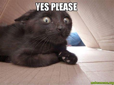 Yes Please Meme - yes please schitzo cat make a meme