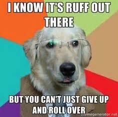 Meme Generator Dog - inspiration on pinterest