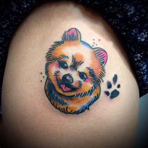 pomeranian in the world the 10 coolest pomeranian designs in the world