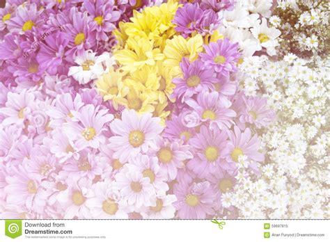 style flower white yellow purple chrysanthemum flower soft style