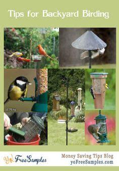 Backyard Bird Feeding Tips Gardening On Pinterest