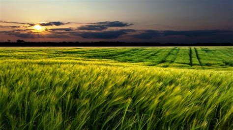 wallpaper green field green field sunset landscape wide wallpaper