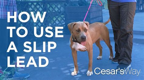 how to use whisperer lead 25 best ideas about andre millan on cesar millan cesar millan