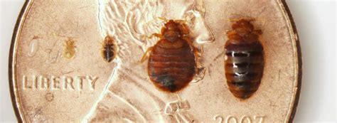 bedbug extermination methods archives bed bugs