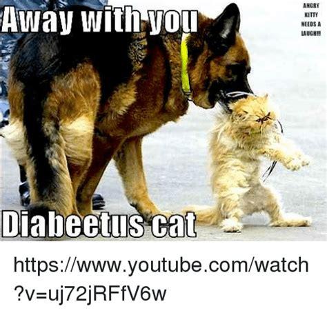 Diabeetus Cat Meme - 25 best memes about diabeetus cat diabeetus cat memes