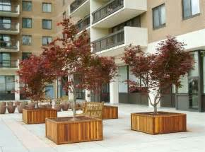 large tree planter box exteriors trees