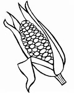 corn coloring page corn stalk coloring pages coloring home