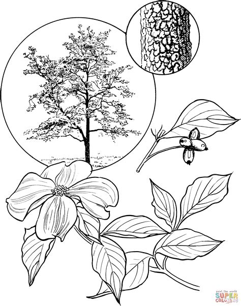 coloring page of dogwood flowers flowering dogwood tree coloring page free printable