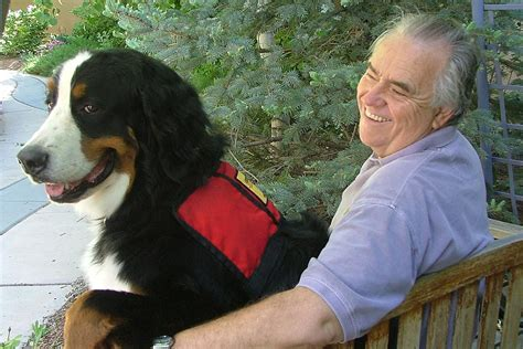 owner trained service program owner self assistance dogs of the west