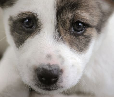 puppy scams protect yourself from the puppy scam