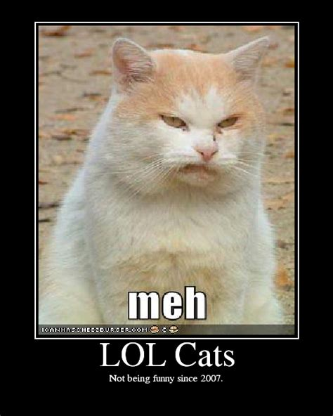 Lolcat Meme - lol cats picture ebaum s world