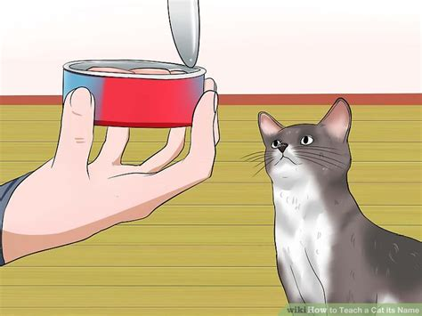 how to teach a its name how to teach a cat its name 9 steps with pictures