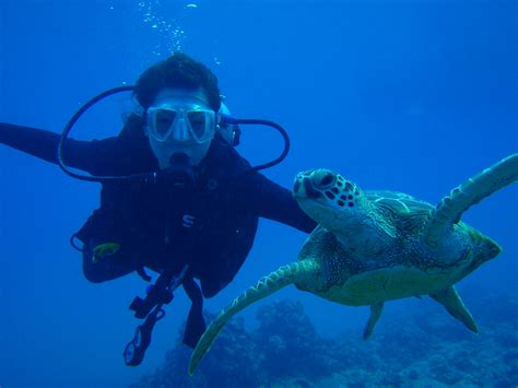 dive scuba scuba diving and