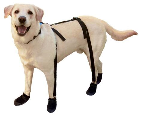 dog boat socks 10 tips to protect your dog s paws from hot pavement