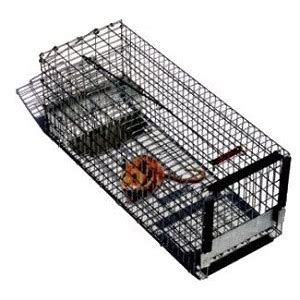 lin feed  seed pied piper  animal trap
