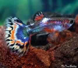 for Sale   AquariumFish.net