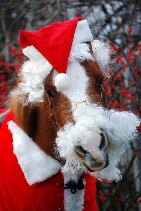 horse wearing santa claus outfit horse costumes christmas horses cute horses