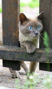 katzen fernhalten katzen artgerecht vom garten fernhalten