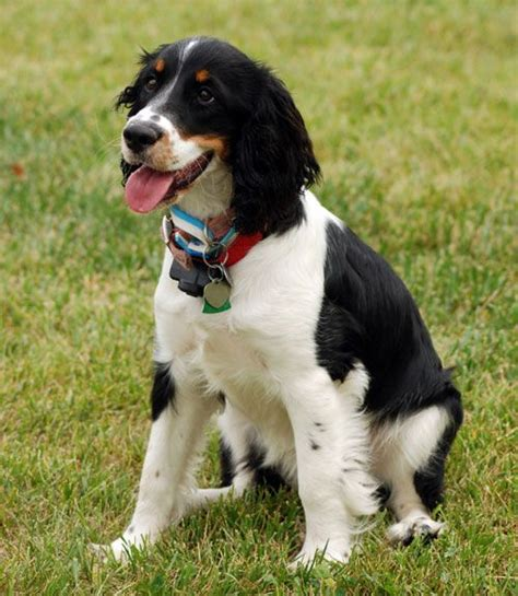 medium dogs 25 best ideas about medium size dogs on medium dogs medium breeds