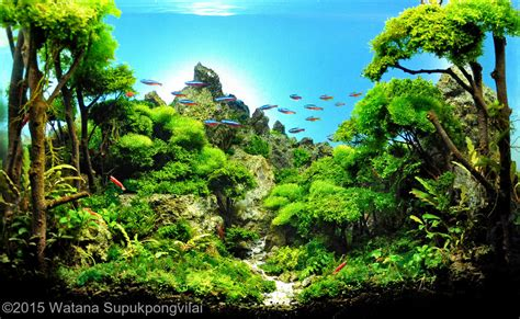 aquascape contest 2015 aga aquascaping contest 228