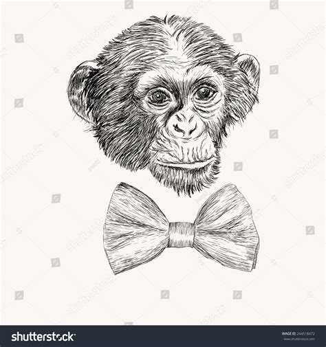 how to draw a doodle monkey sketch realistic monkey bow tie stock vector