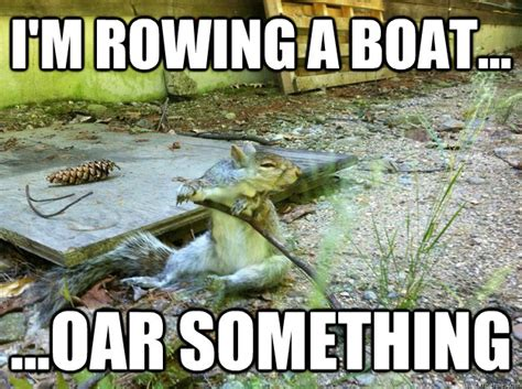 Funny Rowing Memes - i m rowing a boat oar something confused squirrel