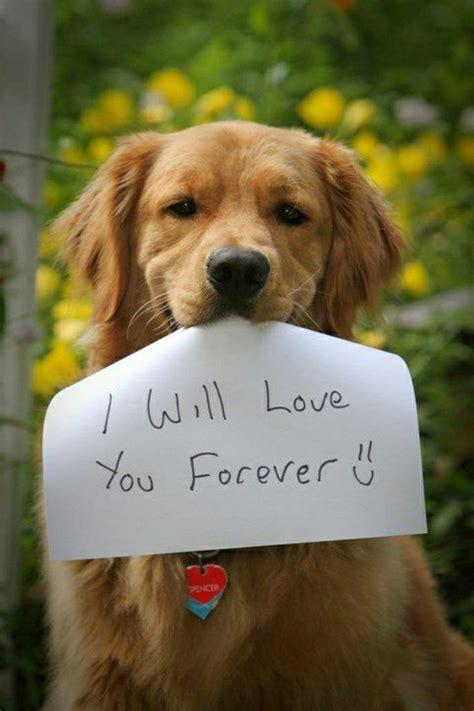 how to love your dog golden retrievers die s 252 223 esten bilder von hunden archzine net