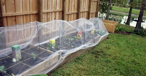 vegetable garden row covers row covers using tulle gardening gardens vegetable garden and plants