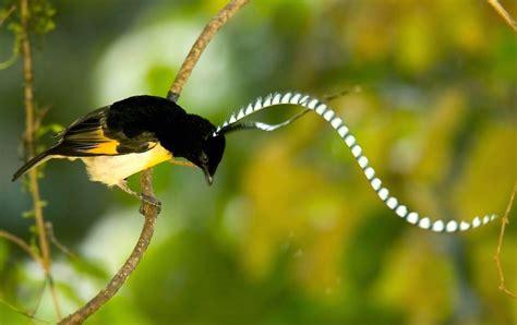 Kaos Nat Geo Mundo A bioorbis as belas e raras aves do para 237 so