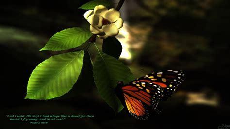 wallpaper 3d butterfly 3d butterfly wallpapers wallpaper cave