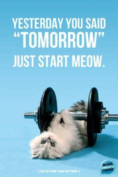 Cat Gym Meme - motivation as given by cats myfitnesspal com