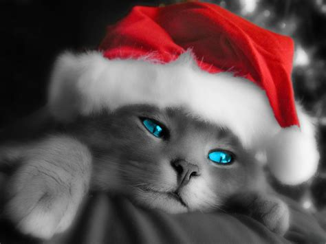 wallpaper cats christmas cute christmas kitten wallpapers free christian wallpapers