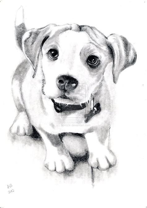 puppy sketches 43 best drawing images on animal drawings draw animals and drawings