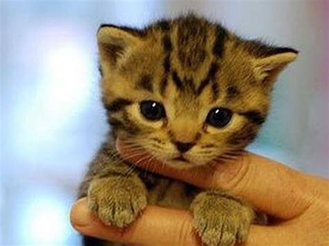 i love cats cute cat kitten pictures cute cat cute bengal kitten 2nd june 2014