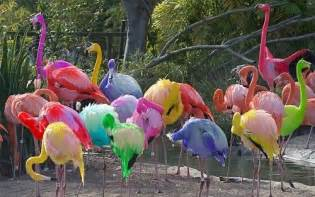 what color is a flamingo flamingos color color color