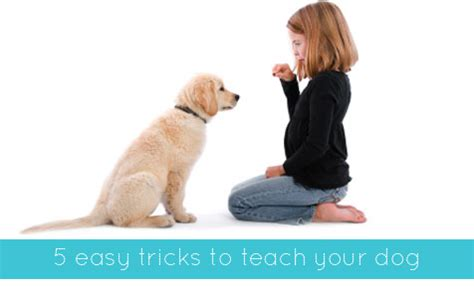 tricks to teach your puppy teach your tricks obedience dogs and