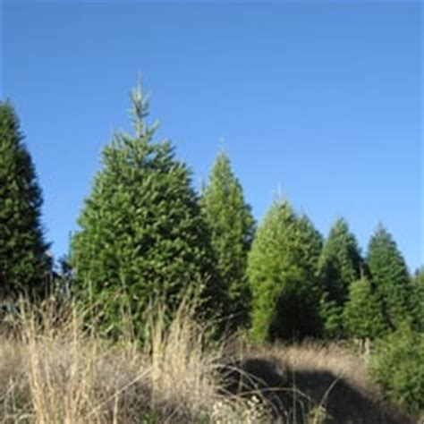 timberline christmas tree farm christmas trees los